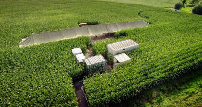 Pop-up restaurant in corn fields